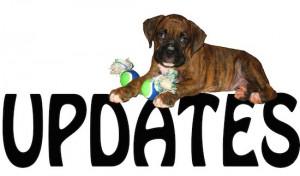 update web 1